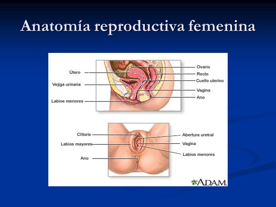 Anatomía reproductiva femenina
