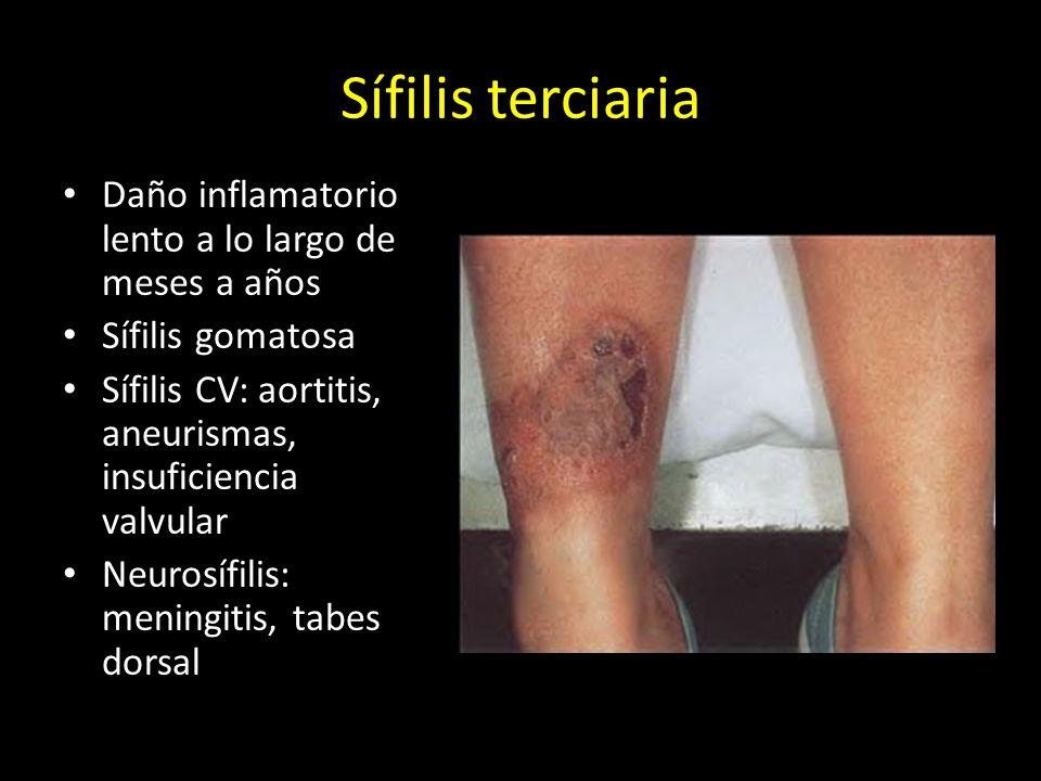 Sífilis terciaria Daño inflamatorio lento a lo largo de meses a años Sífilis gomatosa Sífilis CV: aortitis, aneurismas, insuficiencia valvular Neurosífilis: meningitis, tabes dorsal