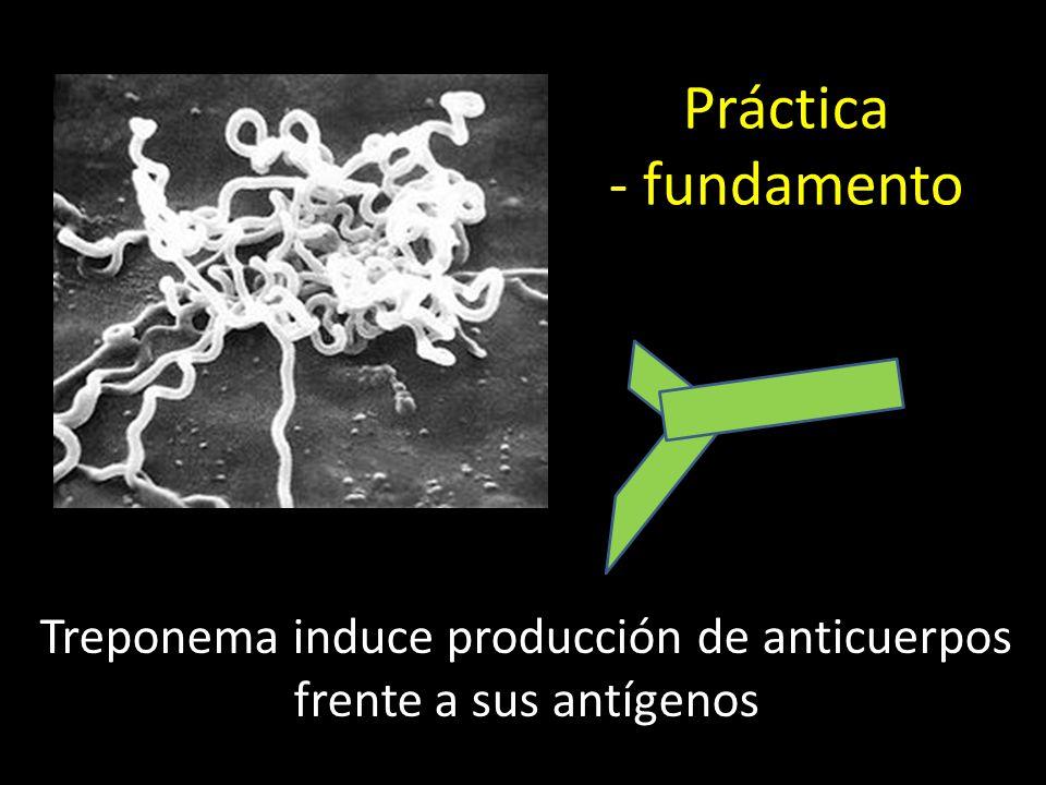 Treponema induce producción de anticuerpos frente a sus antígenos Práctica - fundamento