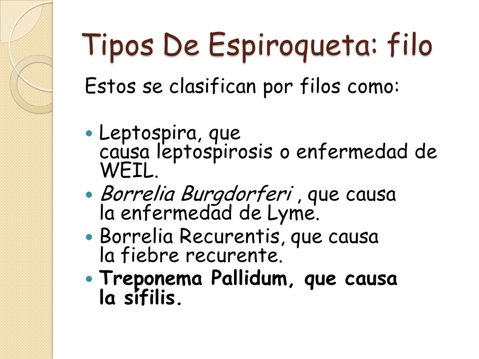 Tipos De Espiroqueta: filo Estos se clasifican por filos como: Leptospira, que causa leptospirosis o enfermedad de WEIL. Borrelia Burgdorferi, que cau