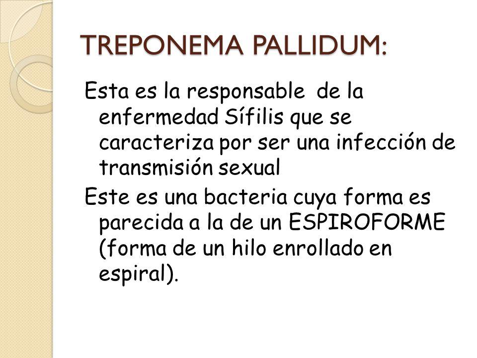 TREPONEMA PALLIDUM: Esta es la responsable de la enfermedad Sífilis que se caracteriza por ser una infección de transmisión sexual Este es una bacteri