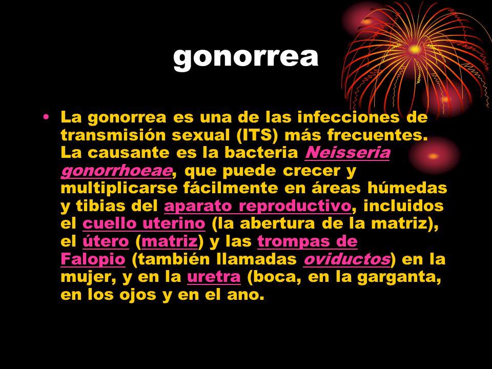gonorrea La gonorrea es una de las infecciones de transmisión sexual (ITS) más frecuentes. La causante es la bacteria Neisseria gonorrhoeae, que puede