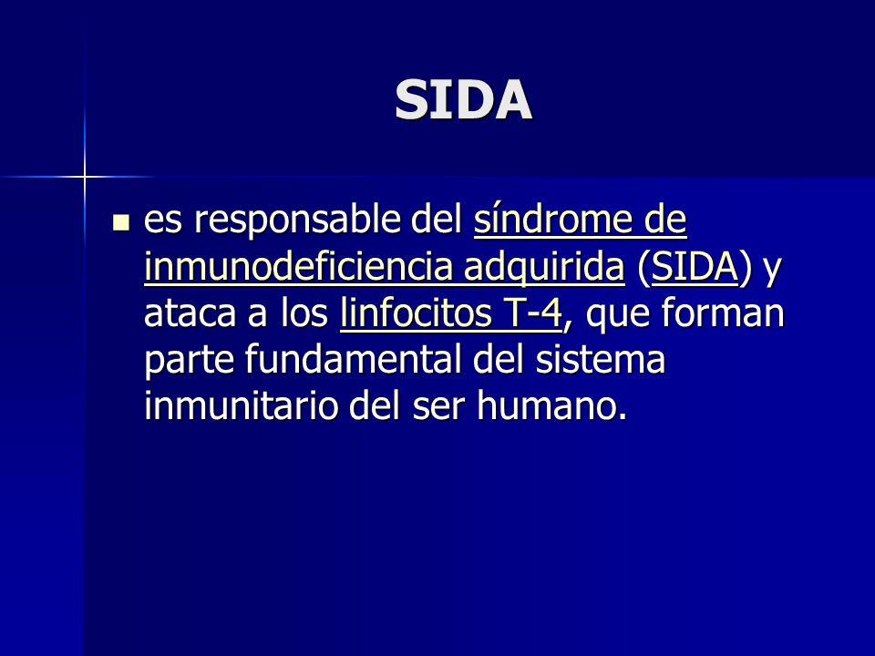 SIDA es responsable del síndrome de inmunodeficiencia adquirida (SIDA) y ataca a los linfocitos T-4, que forman parte fundamental del sistema inmunitario del ser humano.