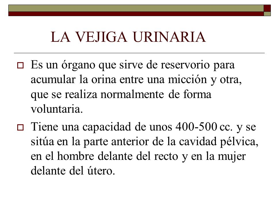 LA VEJIGA URINARIA  Es un órgano que sirve de reservorio para acumular la orina entre una micción y otra, que se realiza normalmente de forma voluntaria.
