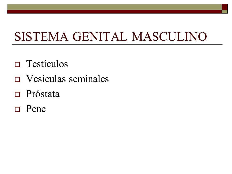 SISTEMA GENITAL MASCULINO  Testículos  Vesículas seminales  Próstata  Pene