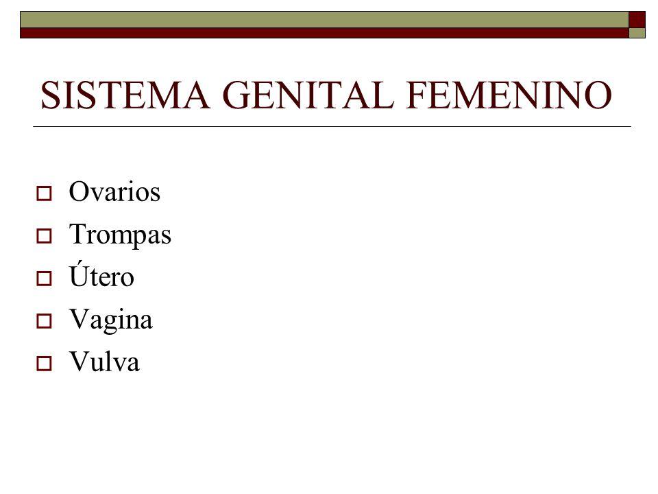 SISTEMA GENITAL FEMENINO  Ovarios  Trompas  Útero  Vagina  Vulva