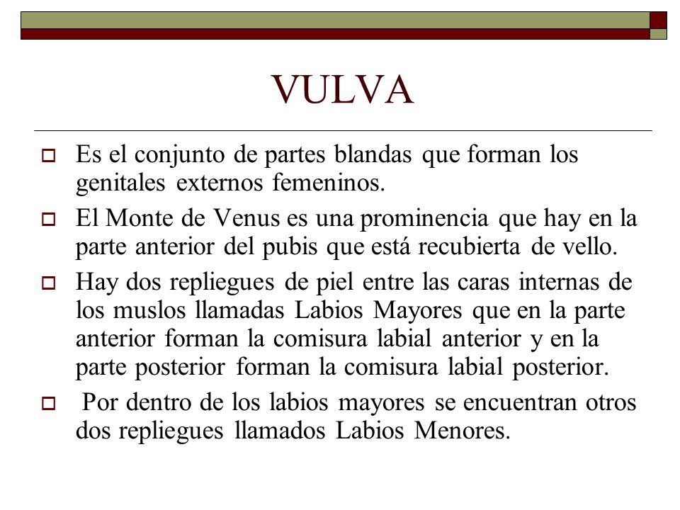 VULVA  Es el conjunto de partes blandas que forman los genitales externos femeninos.