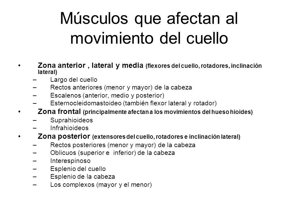Músculos que afectan al movimiento del cuello Zona anterior, lateral y media (flexores del cuello, rotadores, inclinación lateral) –Largo del cuello –Rectos anteriores (menor y mayor) de la cabeza –Escalenos (anterior, medio y posterior) –Esternocleidomastoideo (también flexor lateral y rotador) Zona frontal (principalmente afectan a los movimientos del hueso hioides) –Suprahioideos –Infrahioideos Zona posterior (extensores del cuello, rotadores e inclinación lateral) –Rectos posteriores (menor y mayor) de la cabeza –Oblicuos (superior e inferior) de la cabeza –Interespinoso –Esplenio del cuello –Esplenio de la cabeza –Los complexos (mayor y el menor)