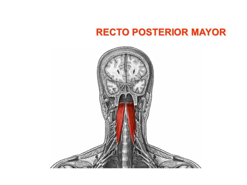 RECTO POSTERIOR MAYOR