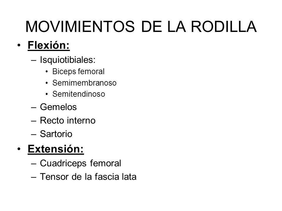 MOVIMIENTOS DE LA RODILLA Flexión: –Isquiotibiales: Biceps femoral Semimembranoso Semitendinoso –Gemelos –Recto interno –Sartorio Extensión: –Cuadriceps femoral –Tensor de la fascia lata