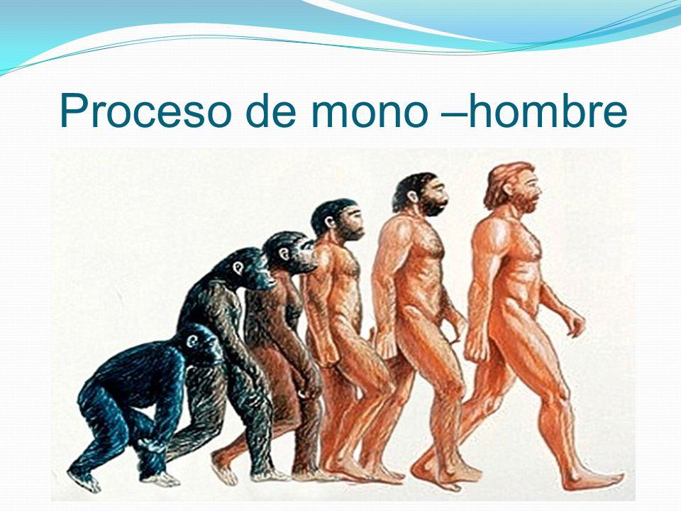 Proceso de mono –hombre