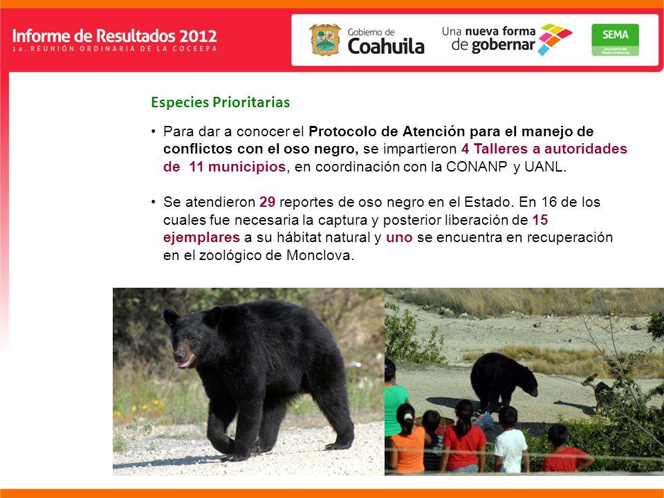 Especies Prioritarias Para dar a conocer el Protocolo de Atención para el manejo de conflictos con el oso negro, se impartieron 4 Talleres a autoridades de 11 municipios, en coordinación con la CONANP y UANL.