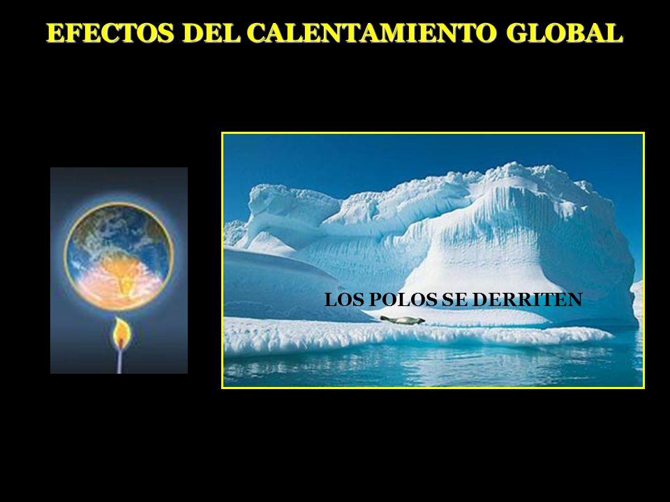 LOS POLOS SE DERRITEN EFECTOS DEL CALENTAMIENTO GLOBAL