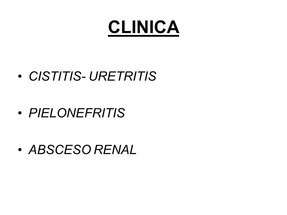 CLINICA CISTITIS- URETRITIS PIELONEFRITIS ABSCESO RENAL