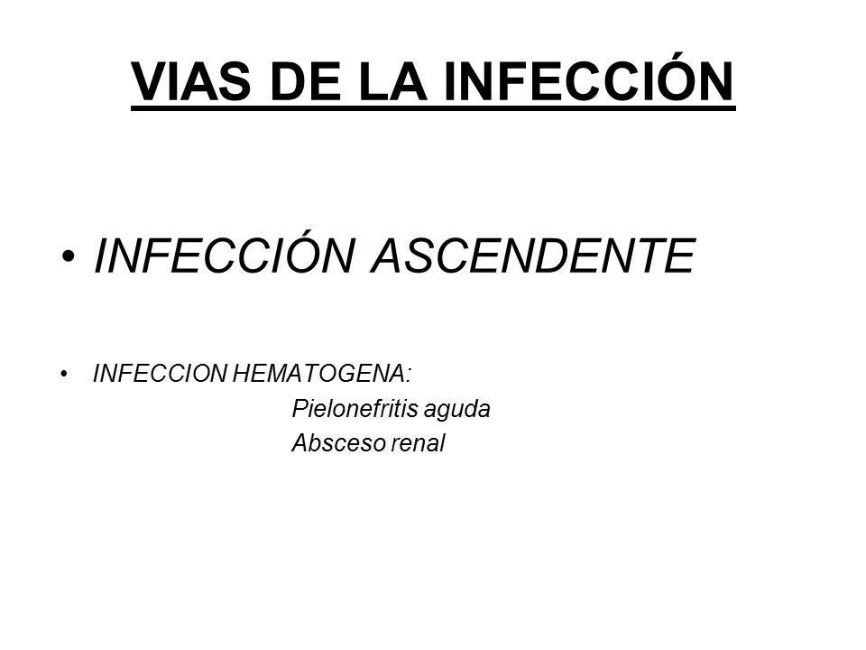 VIAS DE LA INFECCIÓN INFECCIÓN ASCENDENTE INFECCION HEMATOGENA: Pielonefritis aguda Absceso renal