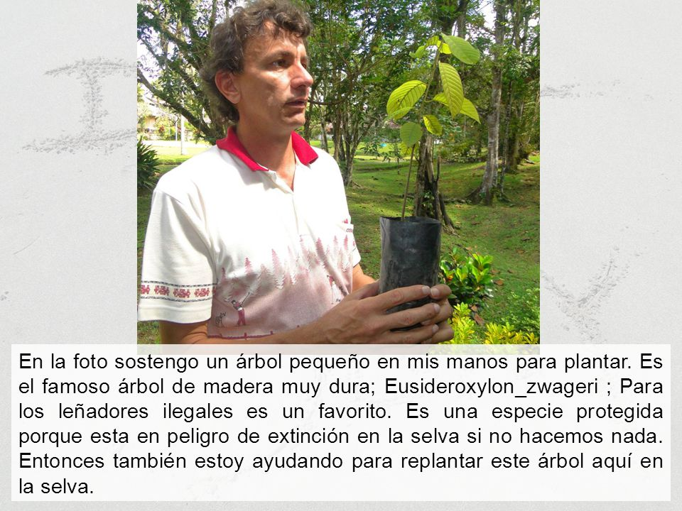 En la foto sostengo un árbol pequeño en mis manos para plantar.