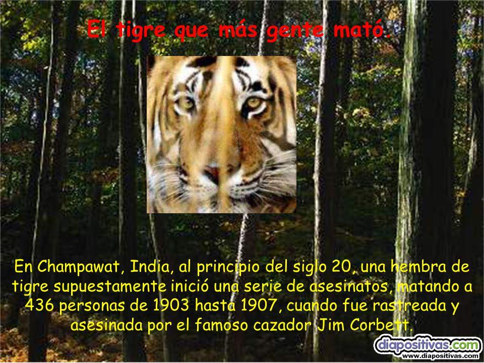 En Champawat, India, al principio del siglo 20, una hembra de tigre supuestamente inició una serie de asesinatos, matando a 436 personas de 1903 hasta 1907, cuando fue rastreada y asesinada por el famoso cazador Jim Corbett.