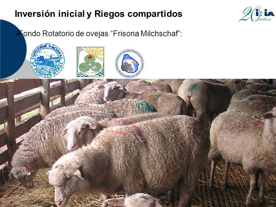 Inversión inicial y Riegos compartidos  Fondo Rotatorio de ovejas Frisona Milchschaf :