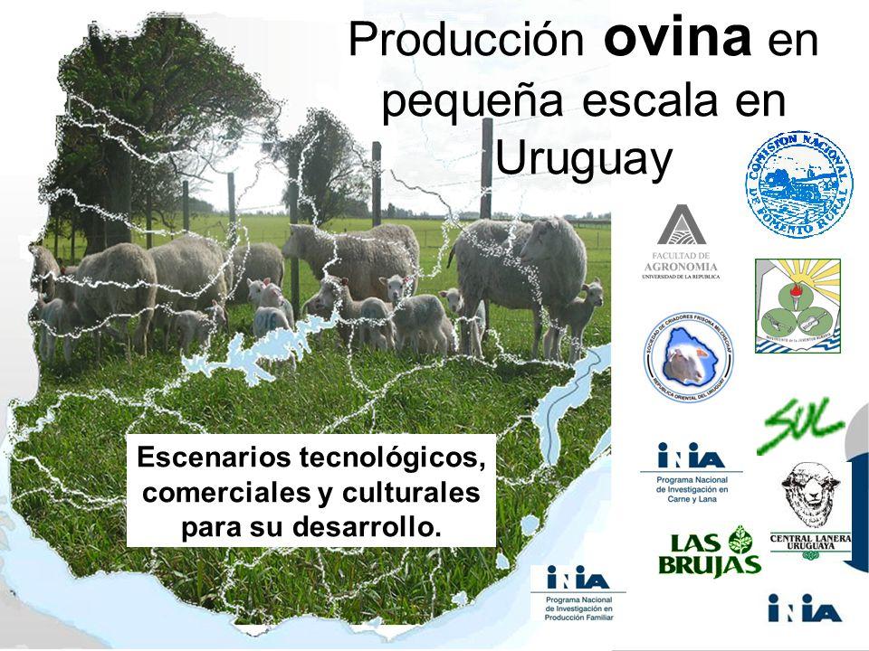 Producción ovina en pequeña escala en Uruguay Escenarios tecnológicos, comerciales y culturales para su desarrollo.