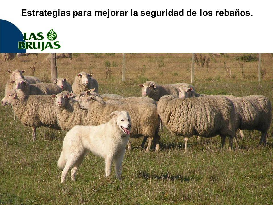 Estrategias para mejorar la seguridad de los rebaños.
