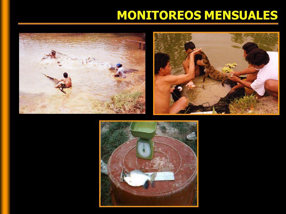 MONITOREOS MENSUALES