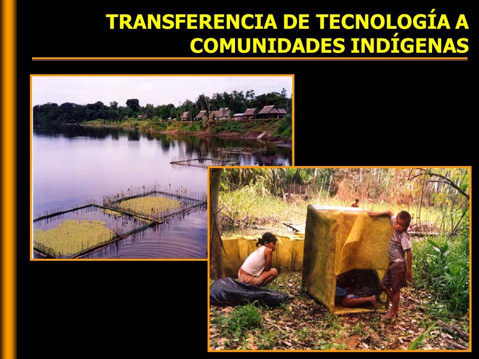 TRANSFERENCIA DE TECNOLOGÍA A COMUNIDADES INDÍGENAS