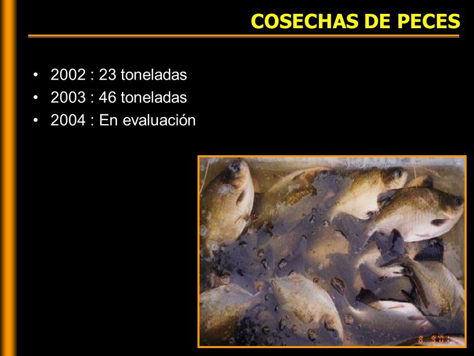 COSECHAS DE PECES 2002 : 23 toneladas 2003 : 46 toneladas 2004 : En evaluación
