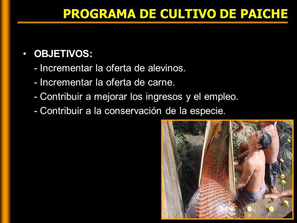 PROGRAMA DE CULTIVO DE PAICHE OBJETIVOS: - Incrementar la oferta de alevinos.