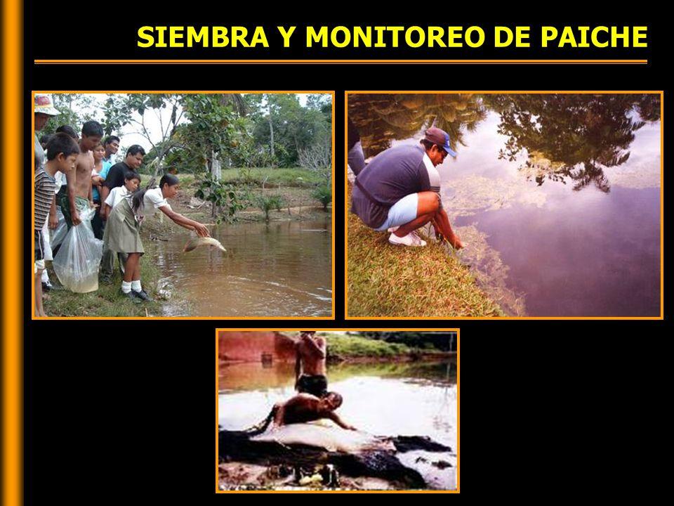 SIEMBRA Y MONITOREO DE PAICHE
