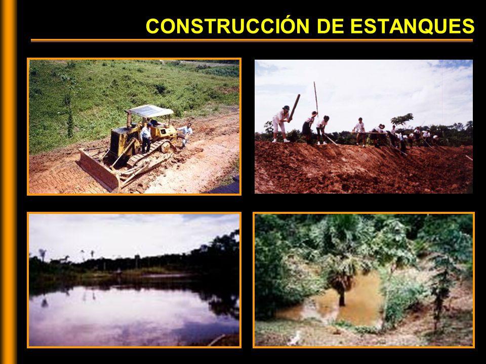 CONSTRUCCIÓN DE ESTANQUES