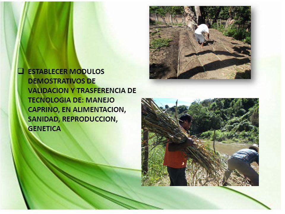  ESTABLECER MODULOS DEMOSTRATIVOS DE VALIDACION Y TRASFERENCIA DE TECNOLOGIA DE: MANEJO CAPRINO, EN ALIMENTACION, SANIDAD, REPRODUCCION, GENETICA