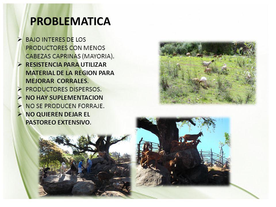 Avance Físico PROBLEMATICA  BAJO INTERES DE LOS PRODUCTORES CON MENOS CABEZAS CAPRINAS (MAYORIA).