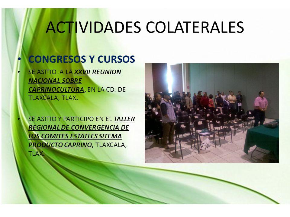 ACTIVIDADES COLATERALES CONGRESOS Y CURSOS SE ASITIO A LA XXVII REUNION NACIONAL SOBRE CAPRINOCULTURA, EN LA CD.
