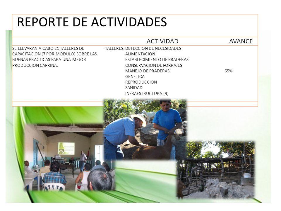 ACTIVIDADAVANCE SE LLEVARAN A CABO 21 TALLERES DE CAPACITACION (7 POR MODULO) SOBRE LAS BUENAS PRACTICAS PARA UNA MEJOR PRODUCCION CAPRINA.