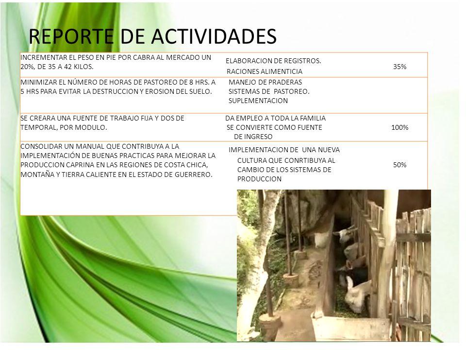 REPORTE DE ACTIVIDADES INCREMENTAR EL PESO EN PIE POR CABRA AL MERCADO UN 20%, DE 35 A 42 KILOS.
