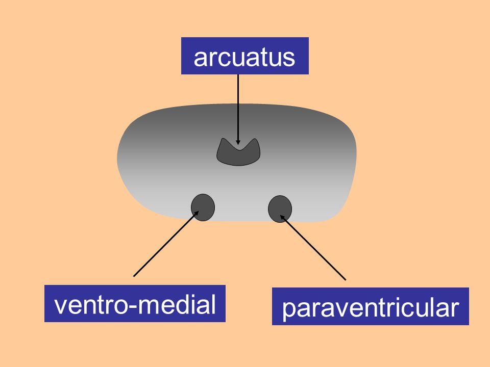 ventro-medial paraventricular arcuatus
