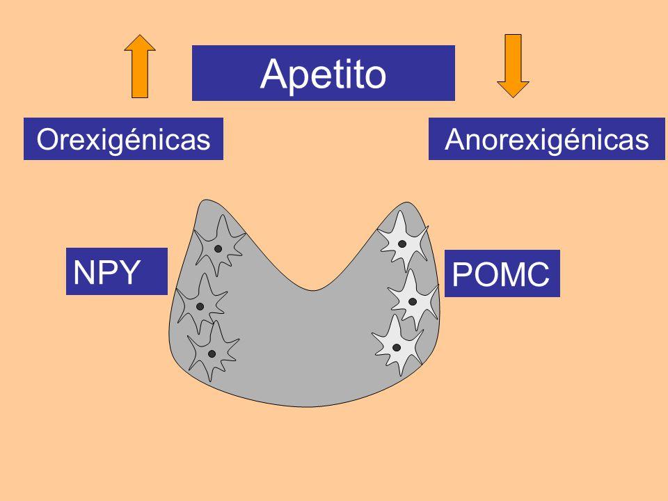 OrexigénicasAnorexigénicas Apetito NPY POMC