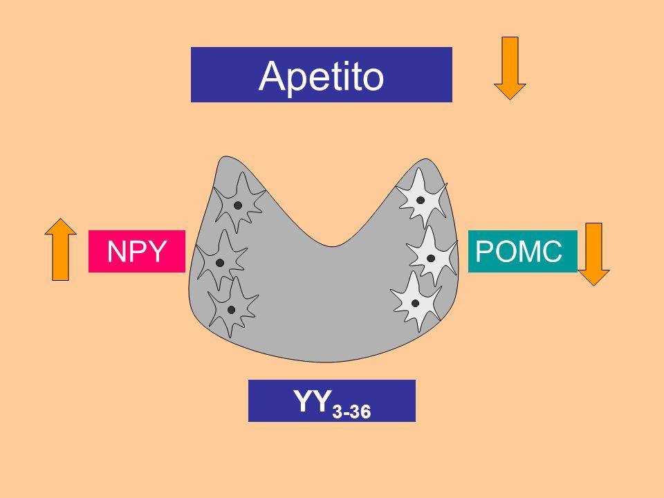 NPYPOMC Apetito YY 3-36