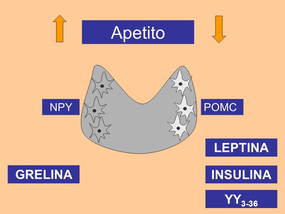 NPYPOMC YY 3-36 Apetito INSULINA LEPTINA GRELINA