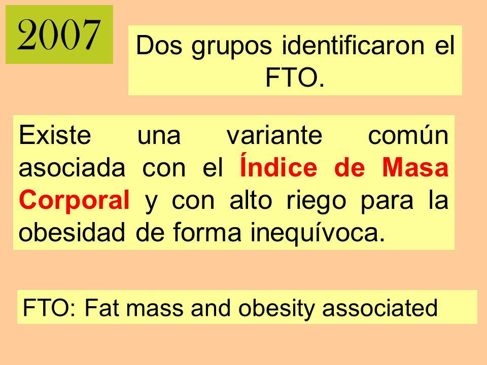 2007 Dos grupos identificaron el FTO.