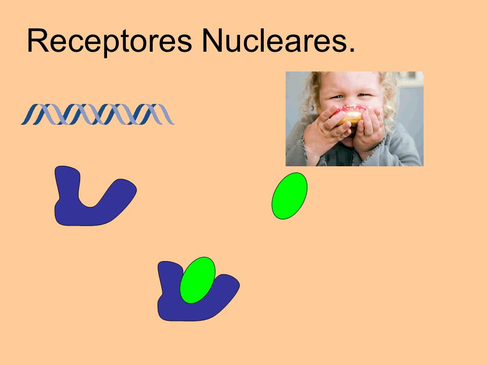 Receptores Nucleares.