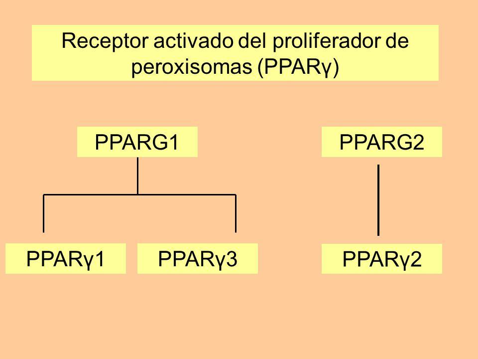 Receptor activado del proliferador de peroxisomas (PPARγ) PPARG1PPARG2 PPARγ1PPARγ3 PPARγ2