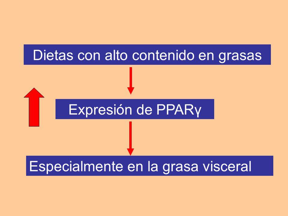 Dietas con alto contenido en grasas Expresión de PPARγ Especialmente en la grasa visceral