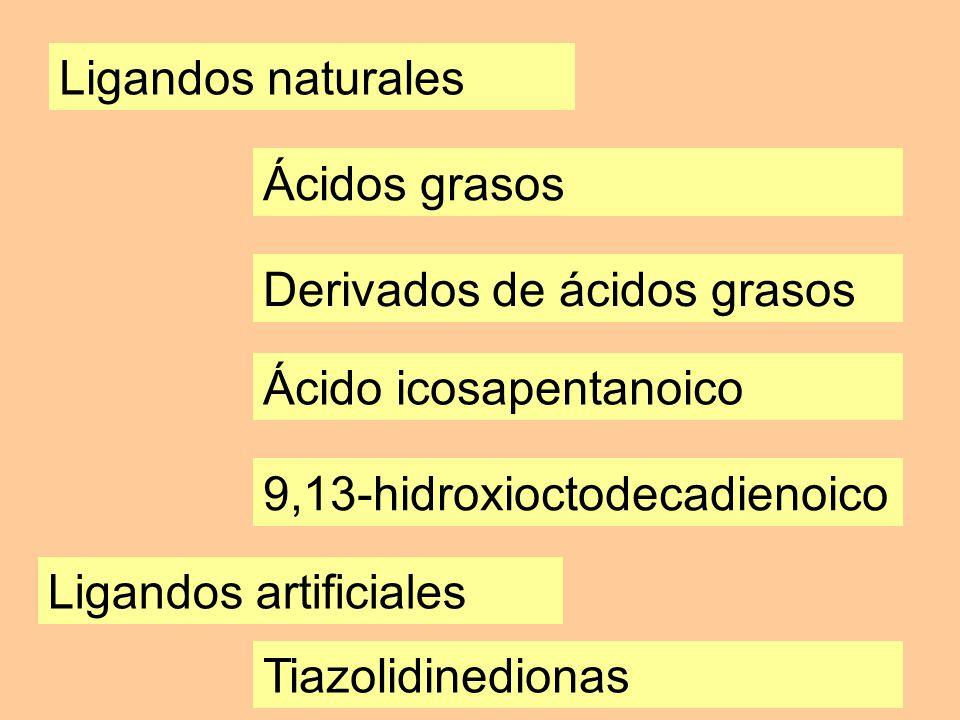 Ligandos naturales Ácidos grasos Derivados de ácidos grasos Ácido icosapentanoico 9,13-hidroxioctodecadienoico Ligandos artificiales Tiazolidinedionas