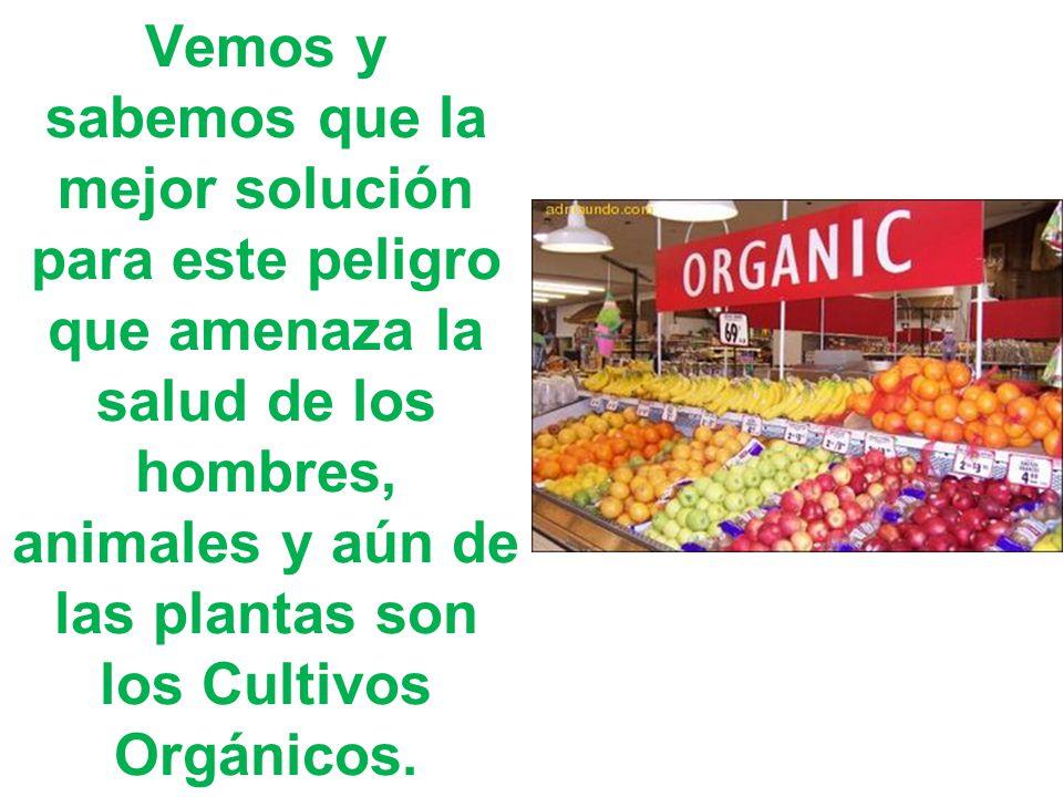 Vemos y sabemos que la mejor solución para este peligro que amenaza la salud de los hombres, animales y aún de las plantas son los Cultivos Orgánicos.