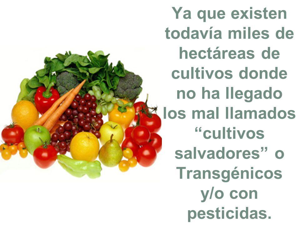 Ya que existen todavía miles de hectáreas de cultivos donde no ha llegado los mal llamados cultivos salvadores o Transgénicos y/o con pesticidas.