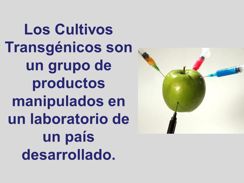 Los Cultivos Transgénicos son un grupo de productos manipulados en un laboratorio de un país desarrollado.