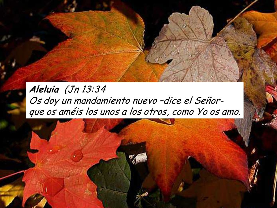 Rom 14,7-9 Ninguno de nosotros vive para sí mismo ni muere para sí mismo; si vivimos, vivimos para el Señor; y si morimos, morimos para el Señor.
