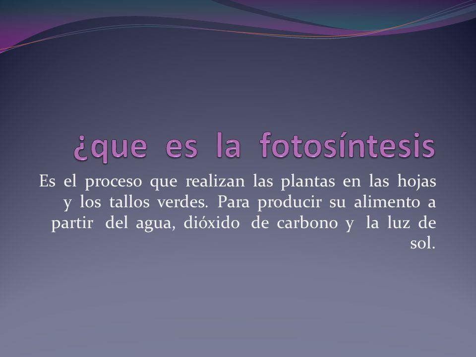 Las plantas tienen órganos masculinos y femeninos.
