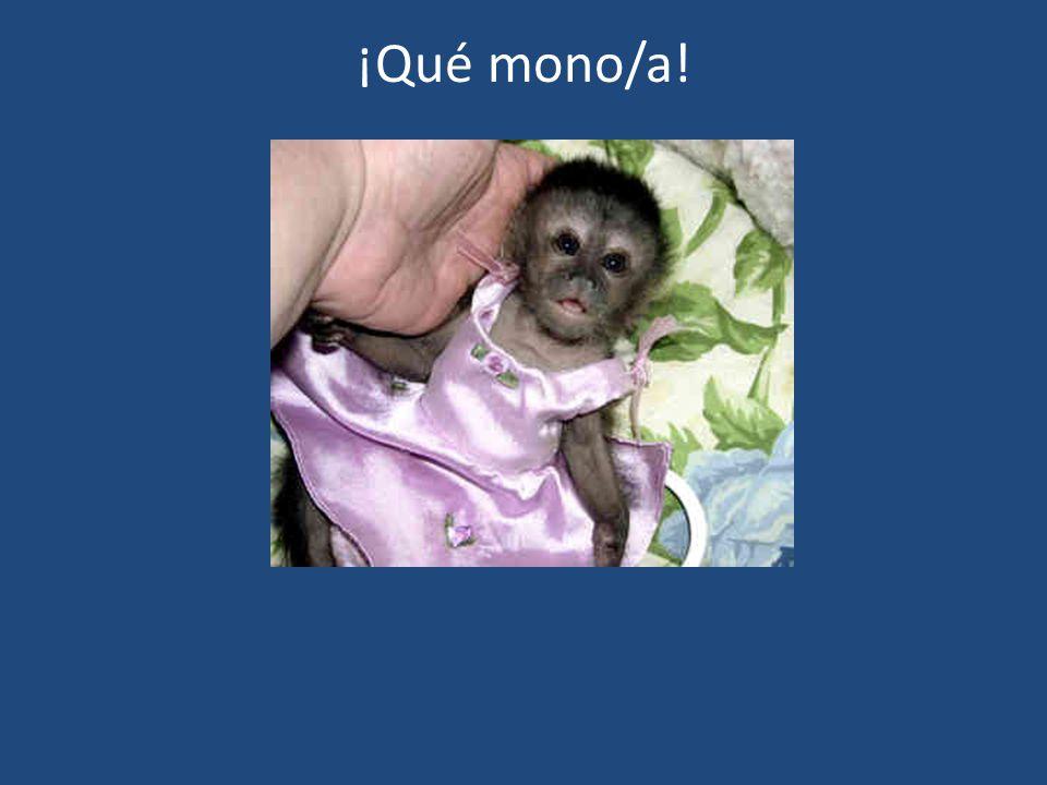 ¡Qué mono/a!